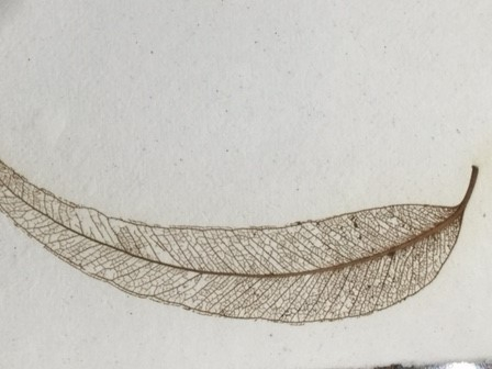 White Cotton Paper with Skeleton Leaf
