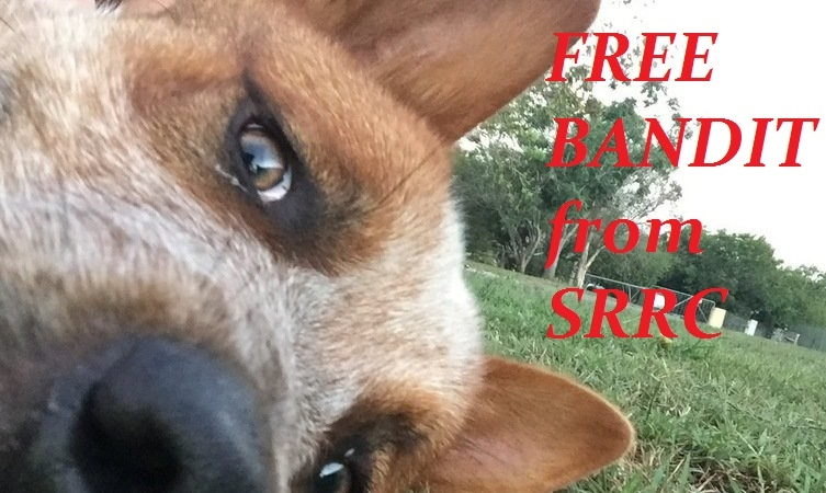 Free Bandit from Scenic Rim Fundraiser