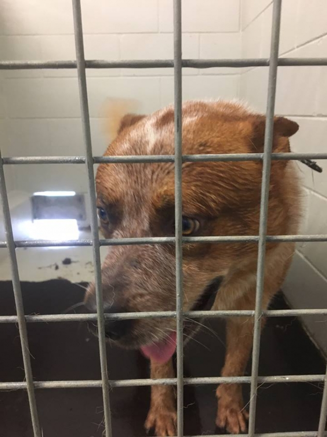 Bandit in Dirty Cell at Dakabin RSPCA Fascility