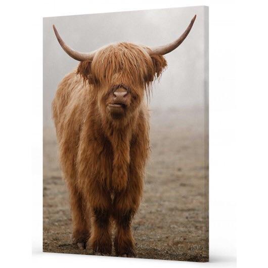 Bovine Calf